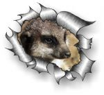 Ripped Torn Metal Design With Cute Meerkat  Motif External Vinyl Car Sticker 105x130mm
